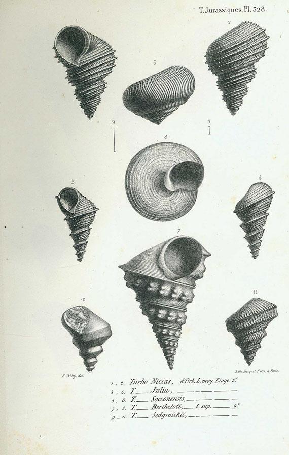 Alcide de Orbigny - Paléontologie Francaise. 2 Bde. 1842