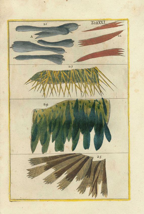 Filippo Bonanni - Rerum naturalium historia. 1773