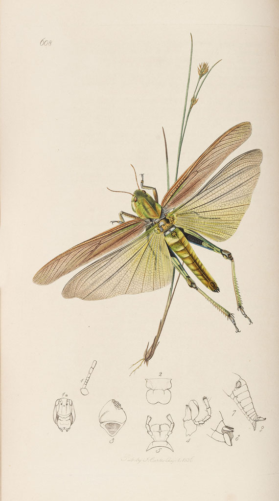 John Curtis - The genera of insects. 8 Bde. 1823-40 - Weitere Abbildung