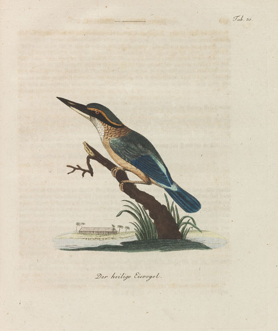 John L. Latham - Übersicht der Vögel. 6 Bde. 1792-98