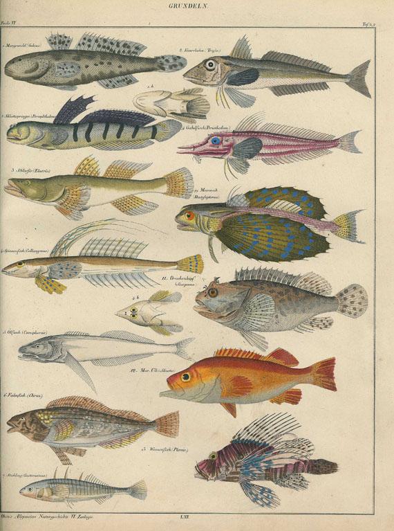 Lorenz Oken - Abbildungen zu Oken's allgemeiner Naturgeschichte. 1843