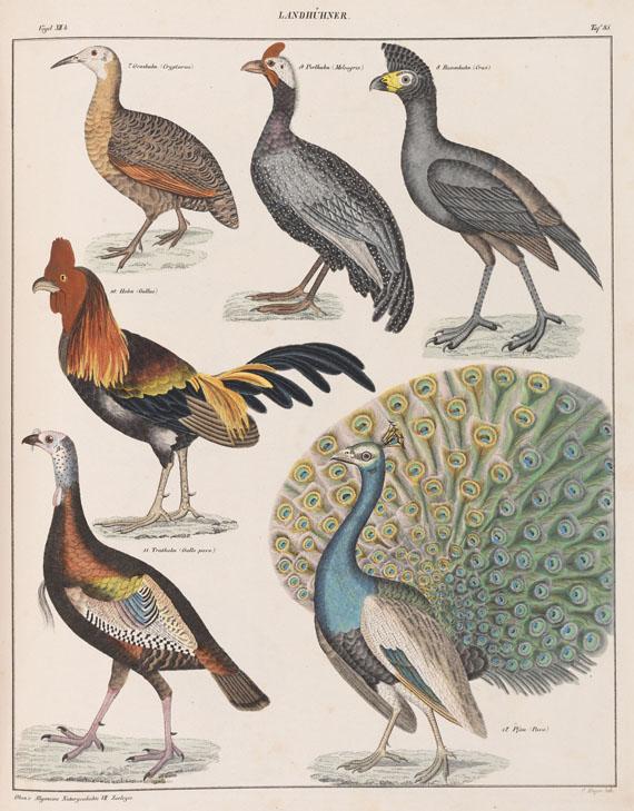Lorenz Oken - Naturgeschichte. 14 Bde.
