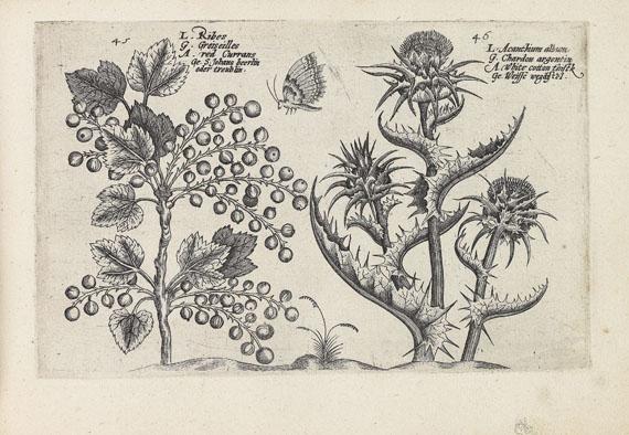 Crispijn de Passe - Hortus floridus.