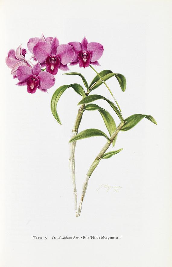 Rudolf Schlechter - Die Orchideen, 1987, 5 Bde. + 1 Bd. Die Orchideen, 1915