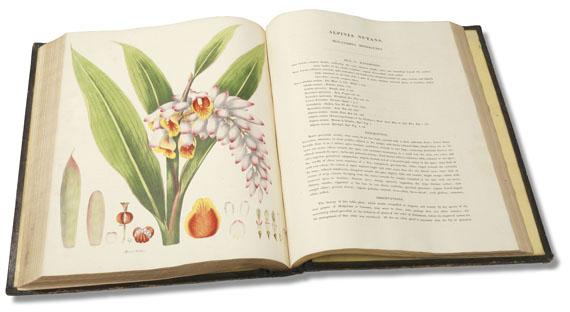 William Roscoe - Monandrian Plants, 1828 - Weitere Abbildung