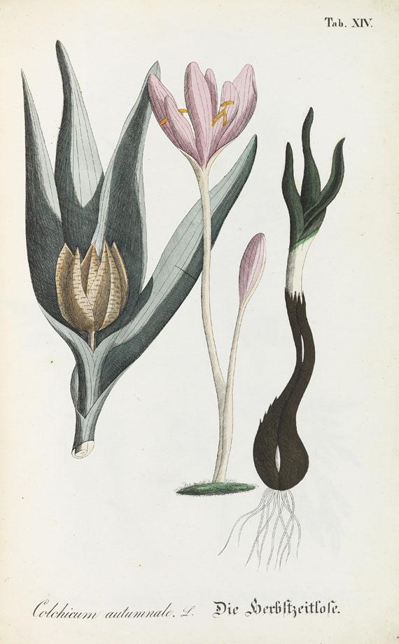 Wichtigsten Giftpflanzen Deutschlands - Die wichtigsten Giftpflanzen Deutschlands in 21 Abbildungen. Um 1840