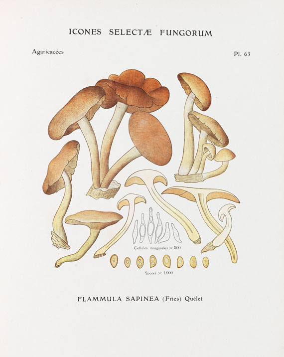 Paul Konrad - Icones selectae fungorum. 1924-37.