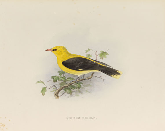 Edwin Carton Booth - Rough notes on the birds in the British Islands. 3 Bde.