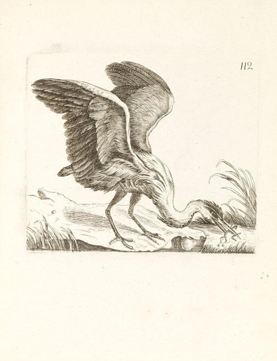 Ornithologie de la France - Ornithologie de la France