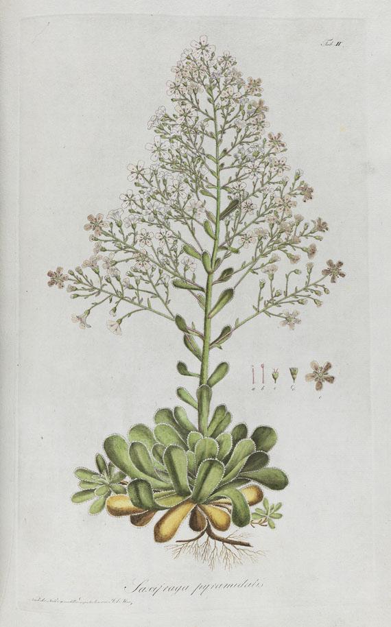 Kaspar M. von Sternberg - Revisio saxifragarum. 1810.