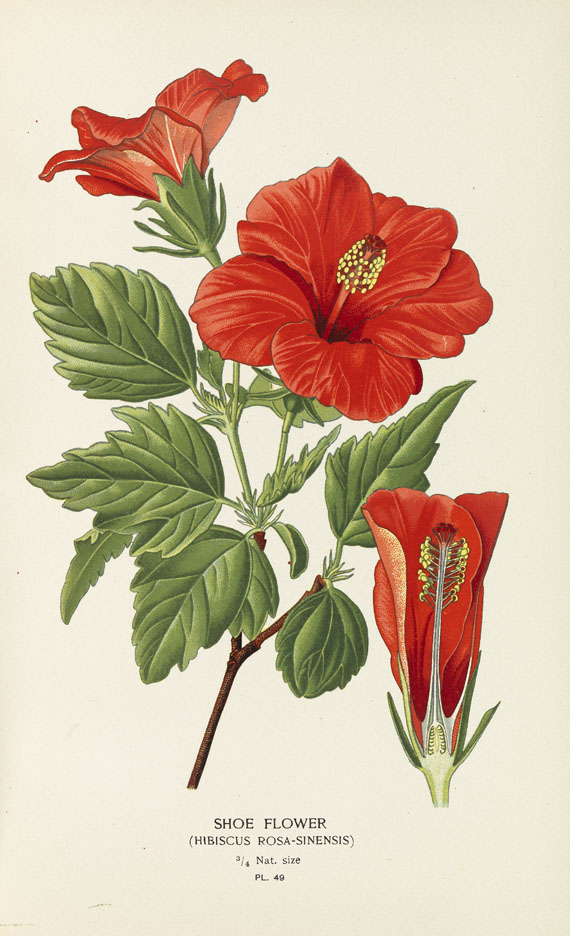 Step, Edward - Favourite Flowers of Garden and Greenhouse. 4 Bde. 1896