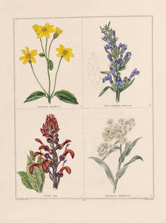 Benjamin Maund - The Botanic Garden. 12 Bde. 1825-51