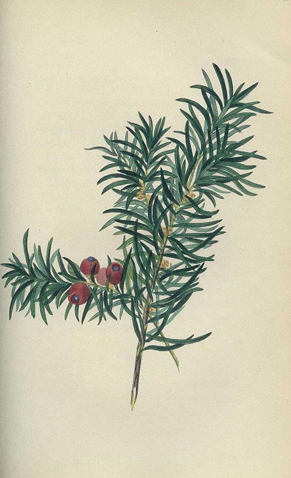Hey, Rebecca - Hey, Reb., Sylvan Musings. 1849 - Sykyta, Das Holz. 1882
