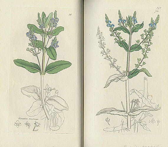 James Sowerby - English botany. 1832-42. 8 Bde.