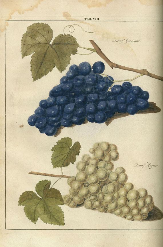 Johann Hermann Knoop - Pomologia. 2 Bde. 1758