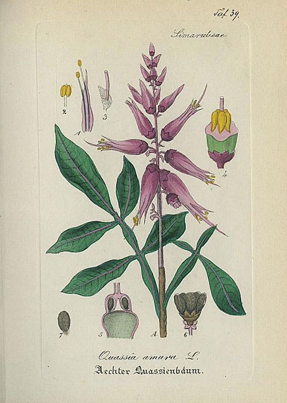 Artus, Wilibald - Arzneipflanzen. 1827-76. 5 Bde.