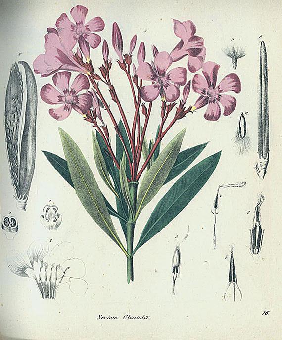 Giftpflanzen - Giftgewächse. 1827-55. 3 Bde.