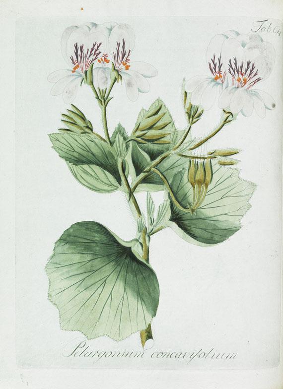 Johann Christoph Wendland - Ericarum. 1798. 2 Bde. - Collectio plantarum. 1805