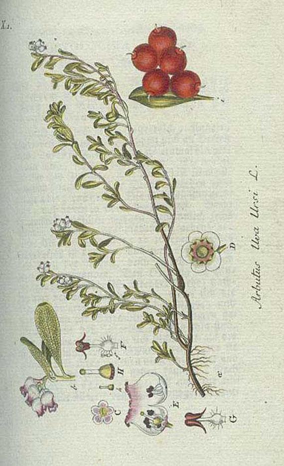 Botanik - 31 Werke deutsche botanische Literatur.