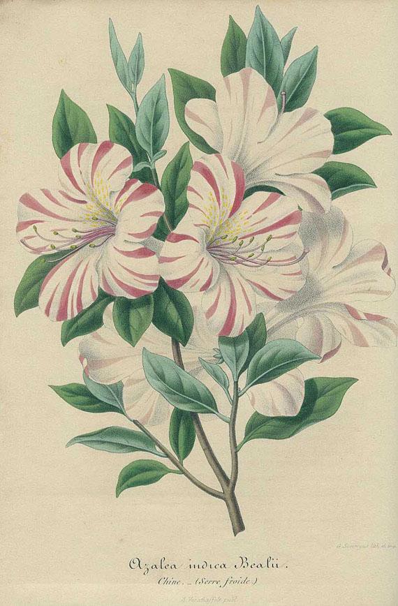 Botanik - Französische Botanik und Naturgeschichte. 28 Bde.