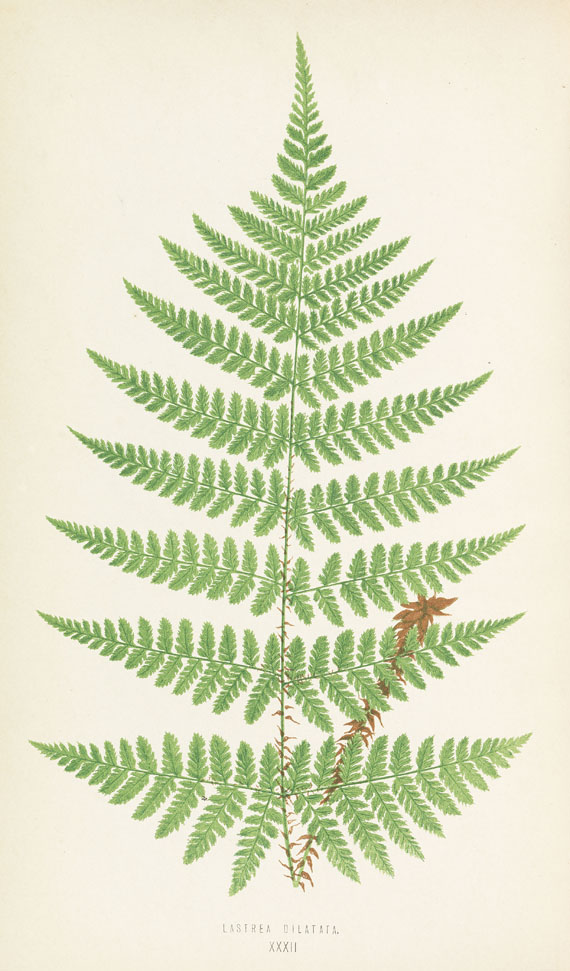 Edward Joseph Lowe - Ferns. + Johnson, Ferns + 1 Beig., zus. 4 Bde. 1855-67