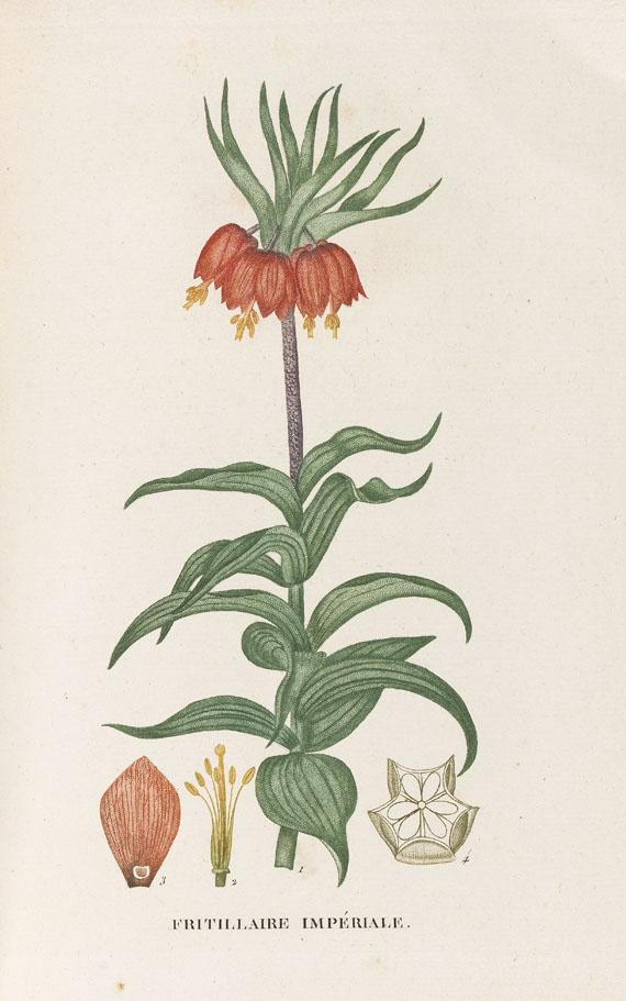 J. H. Jaume Saint-Hilaire - Plantes de la France. 9 Bde. 1808-22
