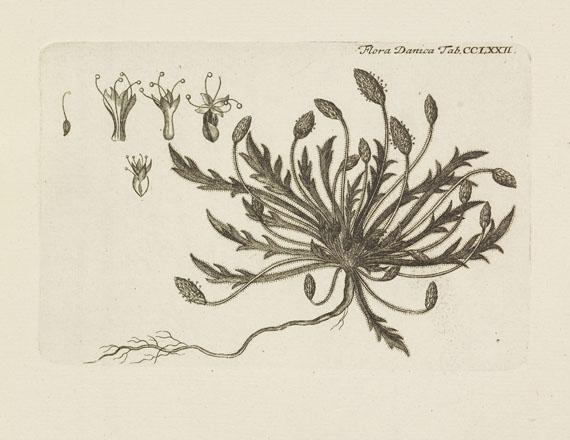Flora Danica - Flora Danica. 10 Bde. 1761-99