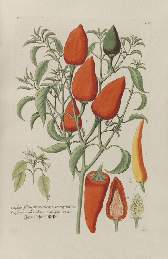Georg W. Knorr - Thesaurus rei herbariae. Bd. 2