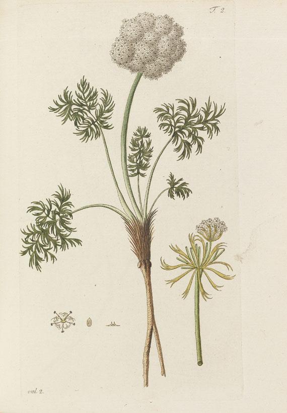 Nicolaus Joseph Jacquin - Miscellanea Austriaca ad botanicam - Weitere Abbildung