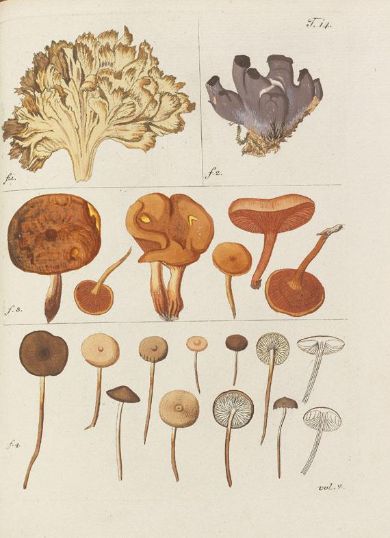 Nicolaus Joseph Jacquin - Miscellanea Austriaca ad botanicam