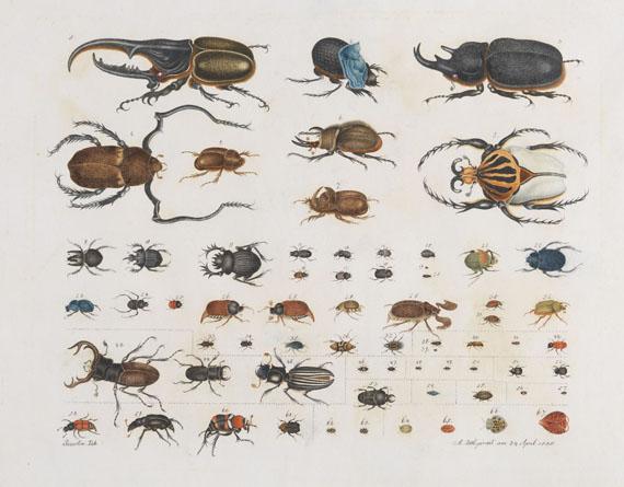 Aloys Zötl - Insecten (Käfer)