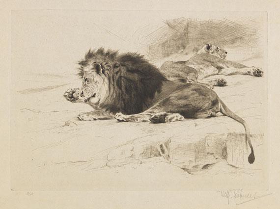 Wilhelm Kuhnert - 3 Bll.: Ruhende Löwen. Afrikanisches Nashorn. Elch