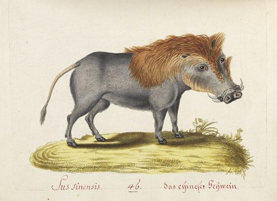 Joachim J. N. Spalowsky - Beytrag zur Naturgeschichte der vierfüssigen Thiere. 2 Bde. - Weitere Abbildung
