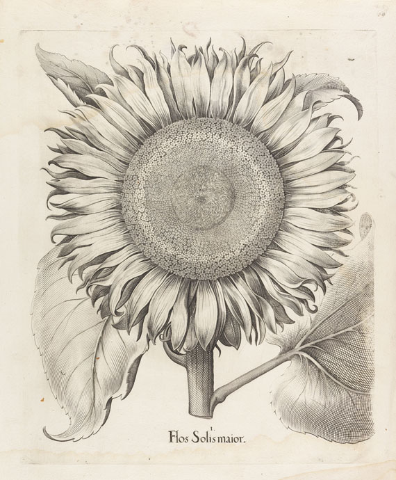 Basilius Besler - Hortus Eystettenis (Fragment mit ca. 190 Bll.)
