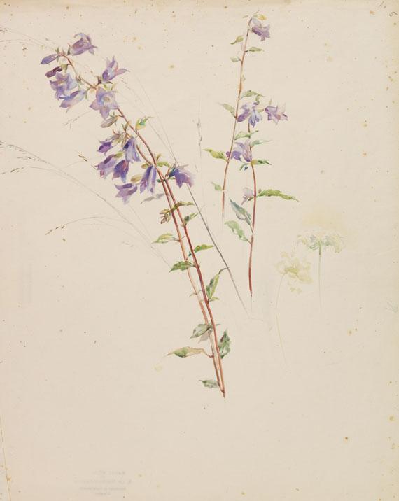 Sophie de Niederhäusern - Glockenblumen