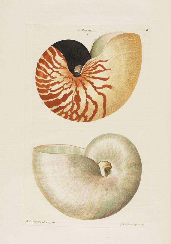Georg W. Knorr - Deliciae Naturae Selectae, 2 Bde. - Weitere Abbildung