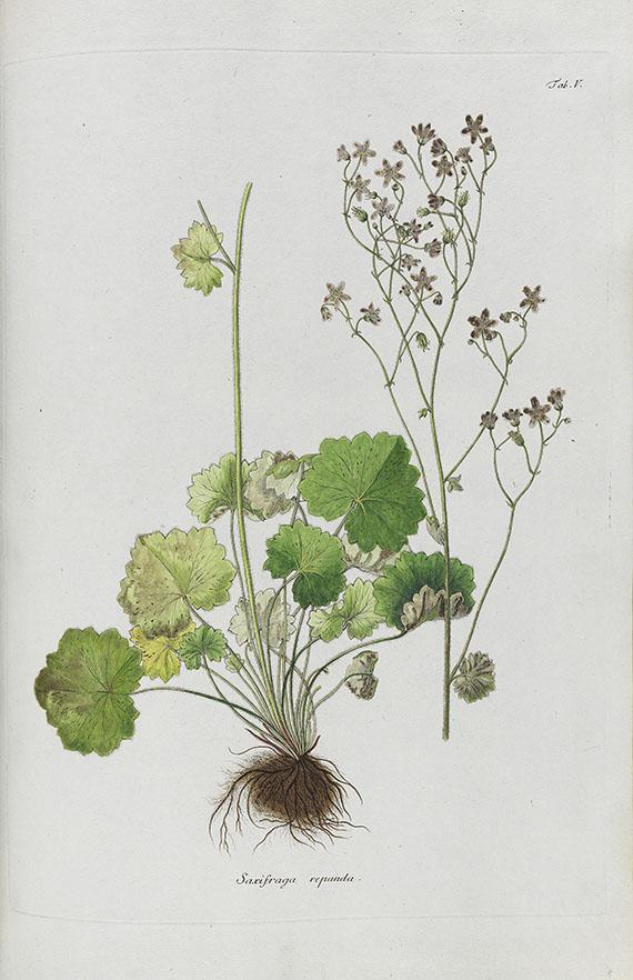 Kaspar Maria von Sternberg - Revisio saxifragarum -