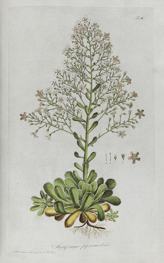 Kaspar Maria von Sternberg - Revisio saxifragarum