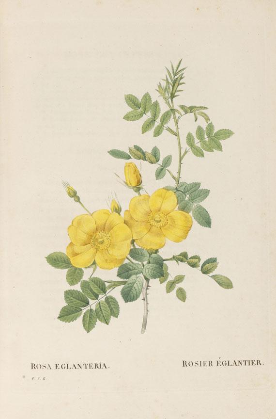 Pierre Joseph Redouté - Les Roses, 3 Bde. 2. Oktavausgabe 1828-29. -
