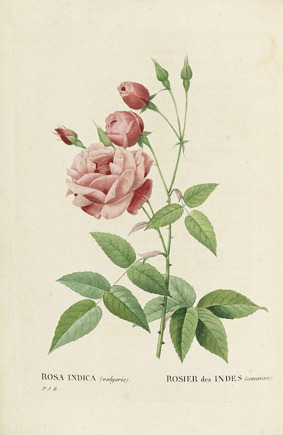 Pierre Joseph Redouté - Les Roses, 3 Bde. 2. Oktavausgabe 1828-29.