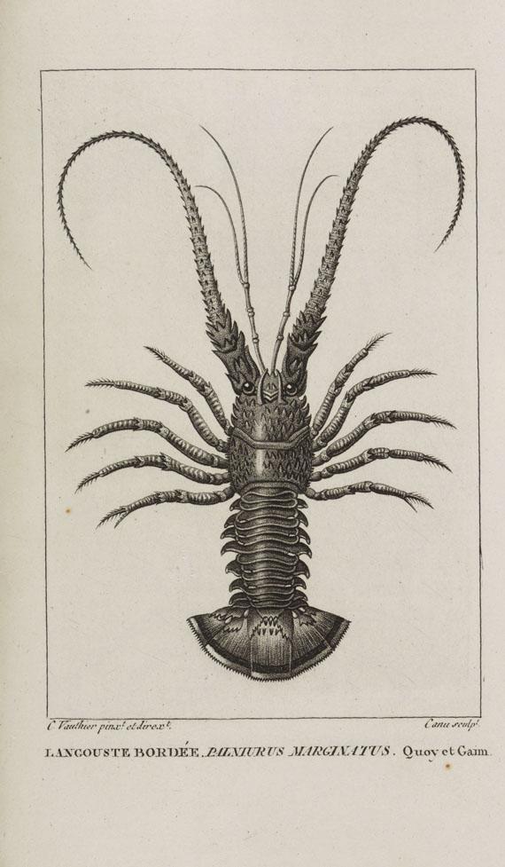 Jean-Baptiste Bory de Saint-Vincent - Dictionnaire classique d'histoire naturelle. 17 Bde.