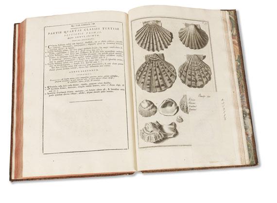 Nicolai Gualtieri - Index Testarum Conchyliorum.