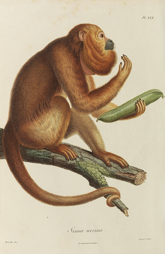 Alexander von Humboldt - Bonpland, Recueil d'observations de zoologie.