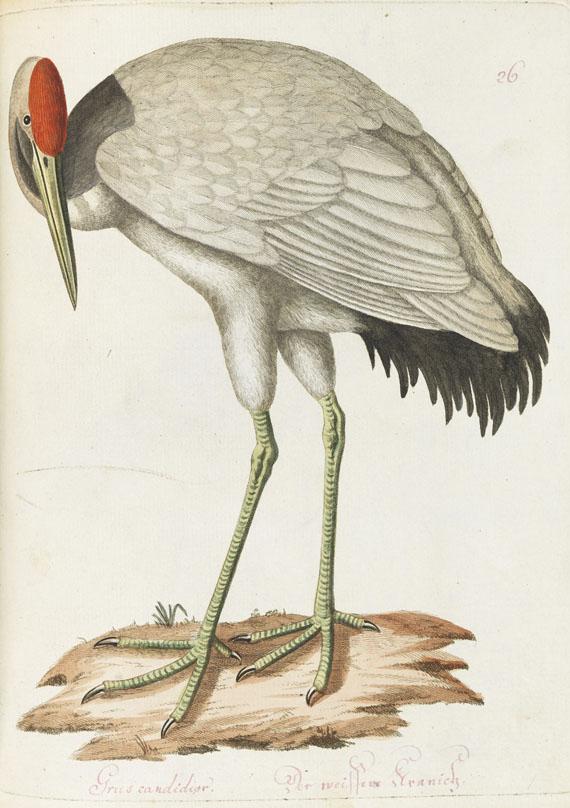 Joachim J. Nepomuk Spalowsky - Beytrag zur Naturgeschichte der Vögel. Bd. I-IV, zus. 4 Bde. -