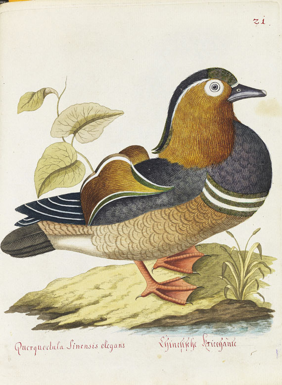Joachim J. Nepomuk Spalowsky - Beytrag zur Naturgeschichte der Vögel. Bd. I-IV, zus. 4 Bde. - Weitere Abbildung