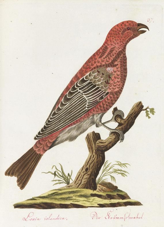 Spalowsky - Beytrag zur Naturgeschichte der Vögel. Bd. I-IV, zus. 4 Bde.