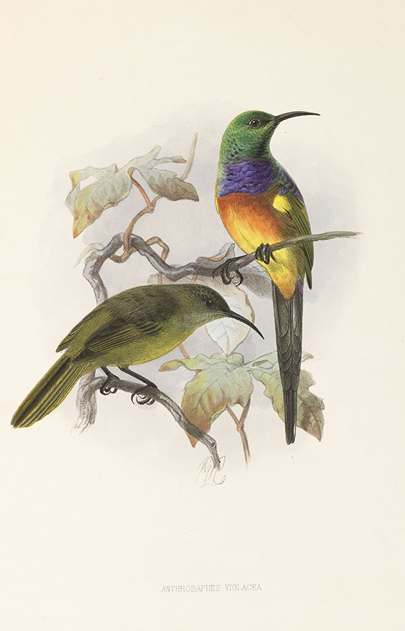 George Ernest Shelley - A monograph of the Nectariniidae, or sun birds. 1876. - Weitere Abbildung