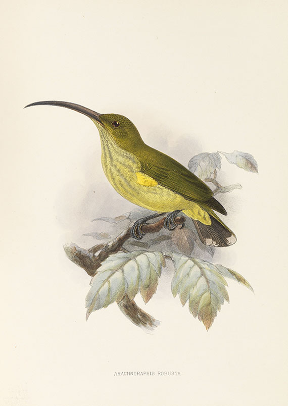 George Ernest Shelley - A monograph of the Nectariniidae, or sun birds. 1876.