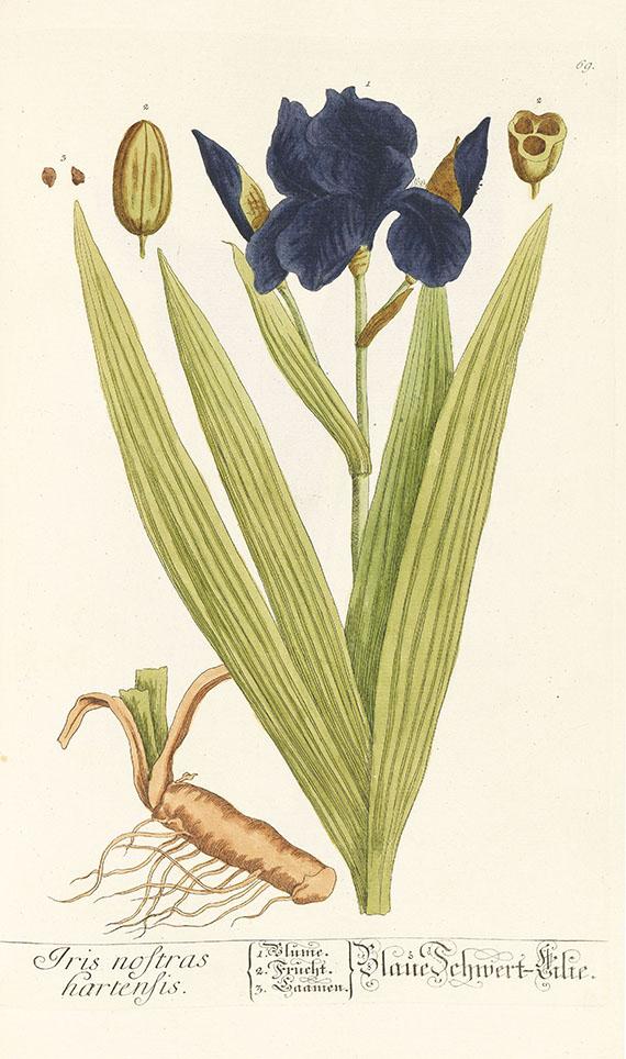 Elisabeth Blackwell - Herbarium, 6 Centurien (Tafeln) in 2 Bdn. - Weitere Abbildung