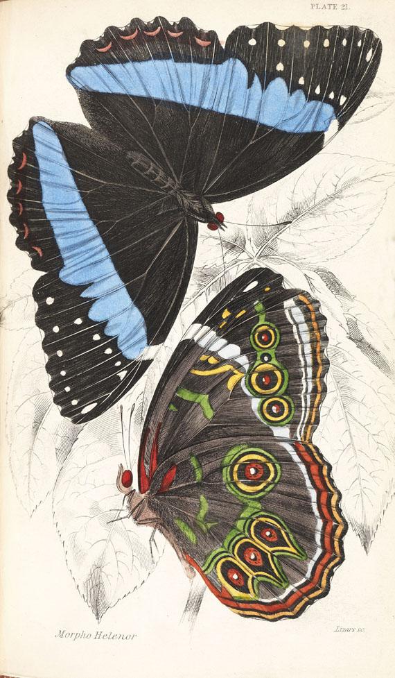 William Jardine - Naturalist's Library, 40 Bde.